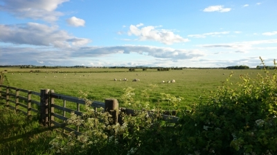 Landscape of country field scene with sheep in field, fence, blue sky