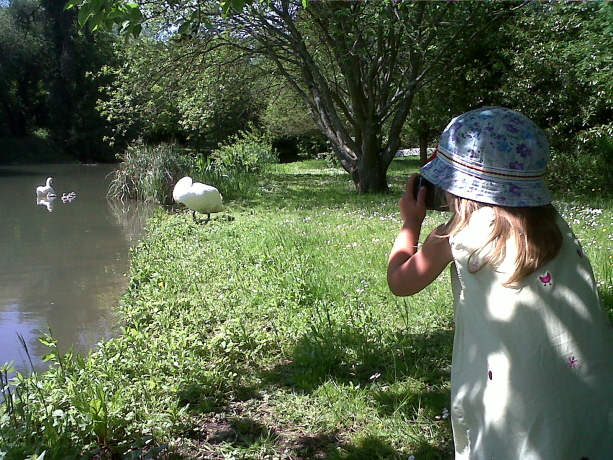Girl in sunhat taking photo of swan on river bank with swan and cygnets in water