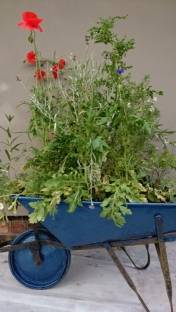 blue-wheelbarrow-planted-with-wildflowers-in-front-of-wall
