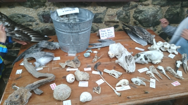display-table-with-skulls-bones-and-feathers-information-centre-inner-farne