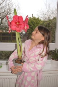 hercules-the-amaryllis-in-flower-being-held-by-child