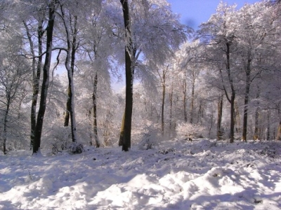 snow-in-woods-high-wycome-buckinghamshire