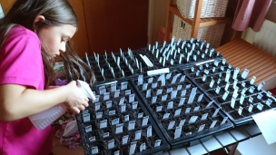 girl-watering-tray-of-seeds