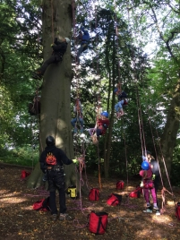 group-of-people-climbing-tree-in-harnesses-with-ropes