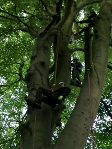 man-in-climbing-harness-in-tree-woman-standing-on-branch-in-tree