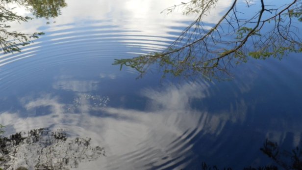 blue sky reflected in puddle with branches