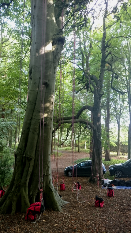 tree-with-climbing-ropes-attached