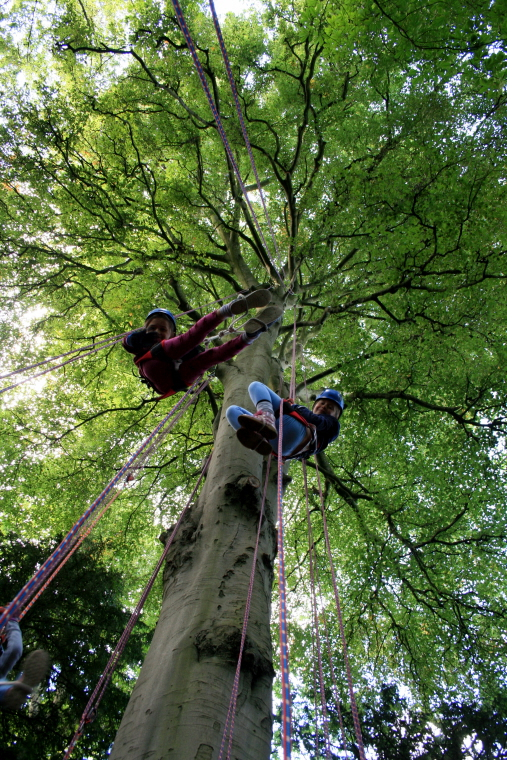 two-girls-hanging-in-harnesses-from-beech-tree