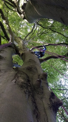 view-up-a-tree-with-cimber-attached-to-rope