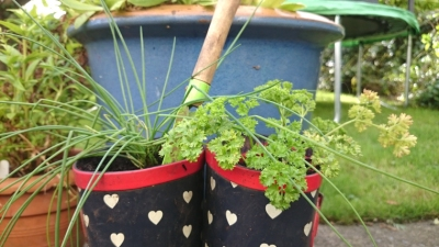 wellie-tops-with-chives-and-parsley-growing-inside