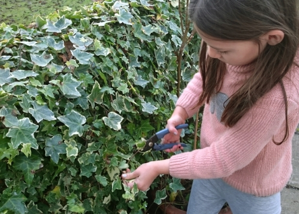 girl-cutting-ivy-with-secateurs