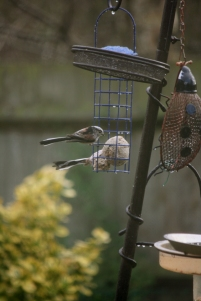 Iamge of two long-tailed-tits-on-feeder
