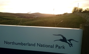 northumberland-national-park-sign-with-sheep-in-field-behind-at-sunset