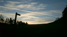 signpost-and-fir-trees-silhouetted-against-evening-sky
