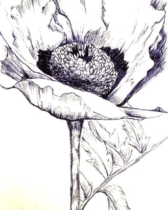Black and white ink drawing of poppy