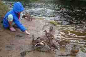Image of girl in blue jacket squatting at riverside feeding mallard ducks