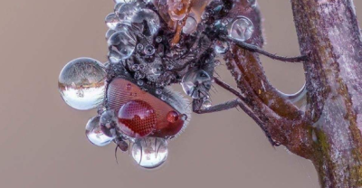 Cropped Macro image of Common Fly covered in dew drops by Alexandr Melnik