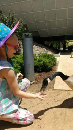 Image of girl in sun hat squatting on pavement hand feeding wild Canada goose